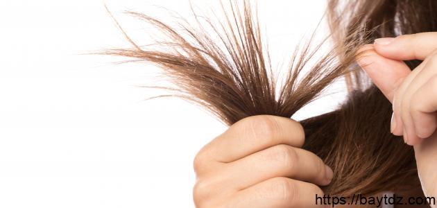 طرق علاج الشعر الجاف والمتقصف