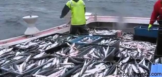 طرق ووسائل صيد الأسماك