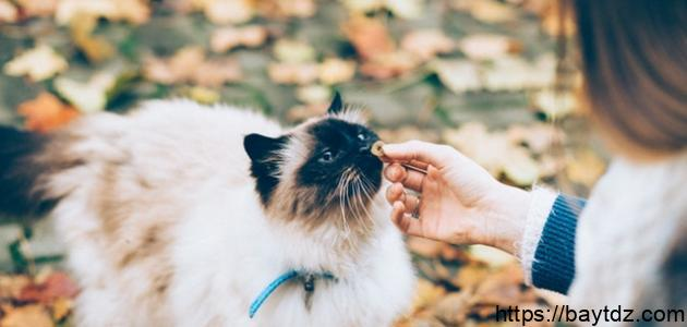 طريقة إطعام القطط