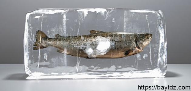 طريقة تخليل السمك البوري