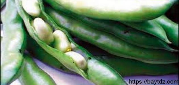 طريقة طبخ الفول الأخضر