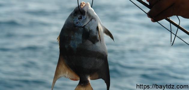 طريقة عمل عجينة السمك