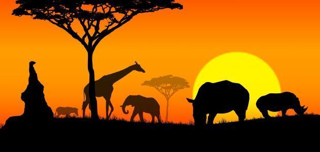 عدد بلدان أفريقيا