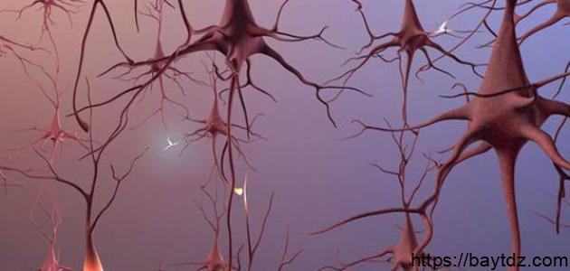 عدد خلايا الدماغ