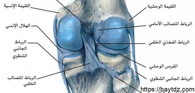 علاج غضروف الركبة
