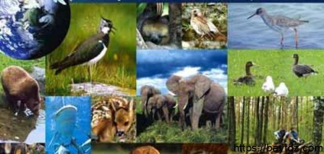 عناصر البيئة