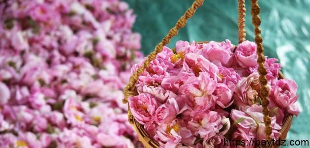 فوائد الورد الطائفي