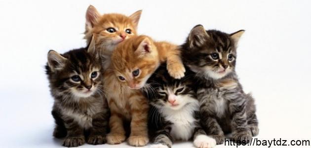 فوائد تربية القطط