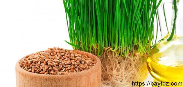 فوائد جنين القمح لكمال الأجسام