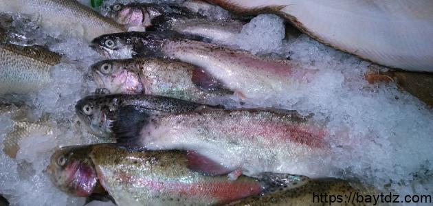 فوائد سمك الناجل
