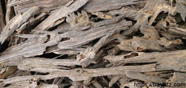 فوائد عشب القسط الهندي