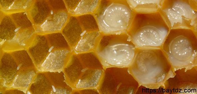 فوائد غذاء ملكات النحل للبشرة والشعر