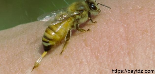 فوائد لدغة النحل
