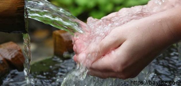 فوائد ماء اللقاح