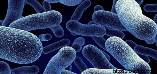 فوائد وأضرار البكتيريا