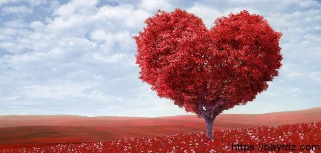 كلمات عن الوفاء والحب