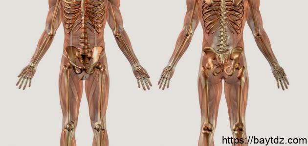 كم عدد الغدد في جسم الإنسان