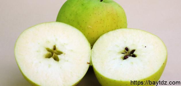 كيف أزرع بذور التفاح