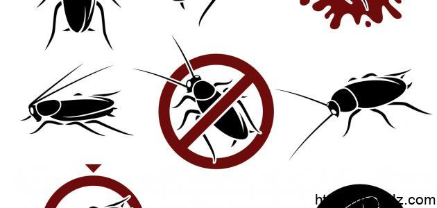 كيف أقضي على الحشرات المنزلية