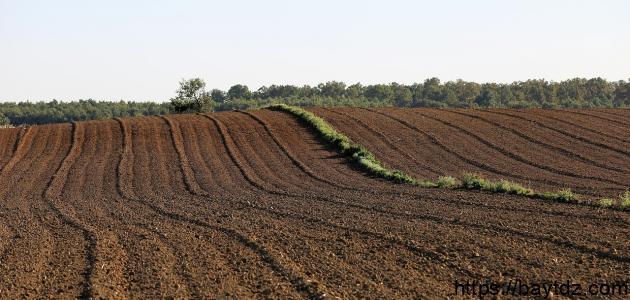 كيف تحافظ على التربة