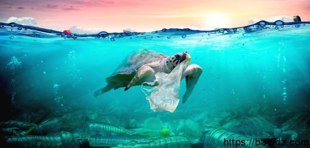 كيف نحافظ على البيئة من التلوث