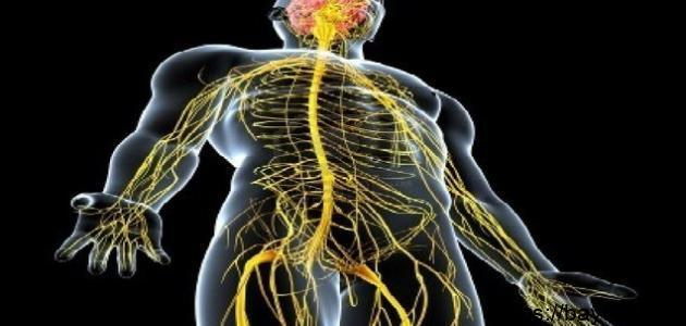 كيف نحافظ على جهازنا العصبي