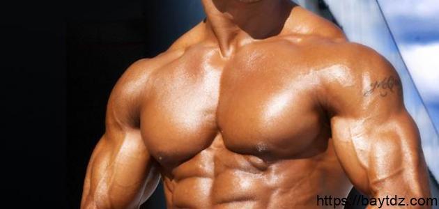 كيف يتم بناء العضلات