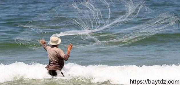 كيف يصطاد السمك