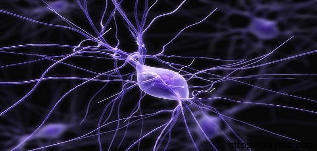 كيف يمكننا المحافظة على صحة الجهاز العصبي وسلامته