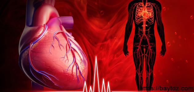 كيف ينبض القلب