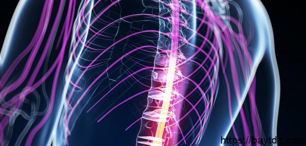 كيفية المحافظة على الجهاز العصبي