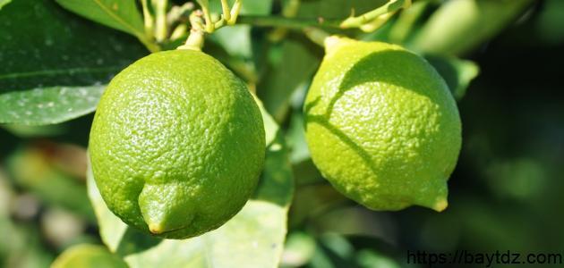 كيفية زراعة بذور الليمون