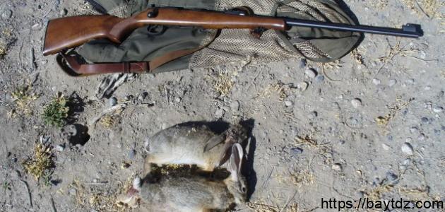 كيفية صيد الأرانب