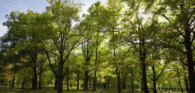 ما أهمية زراعة الأشجار للنظام البيئي