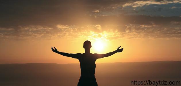 ما أهمية ضوء الشمس للكائنات الحية
