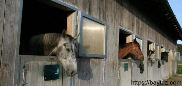 ما اسم بيت الحصان