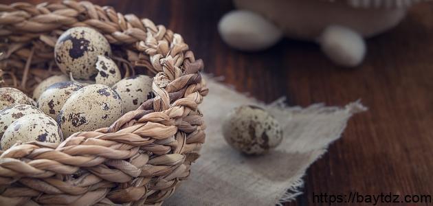ما فوائد بيض السمان