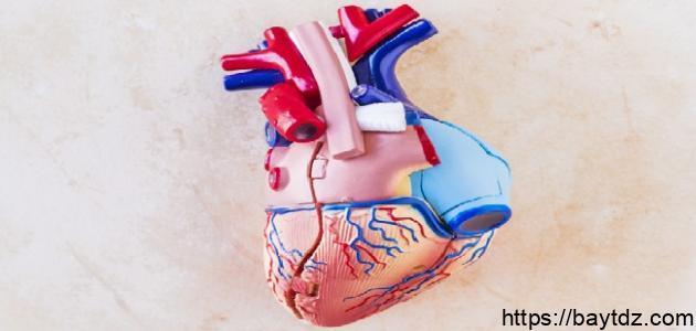 ما هو الشريان الذي يغذي القلب