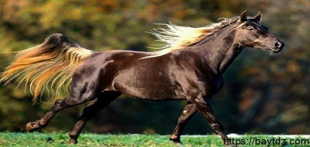 ما هو صوت الحصان