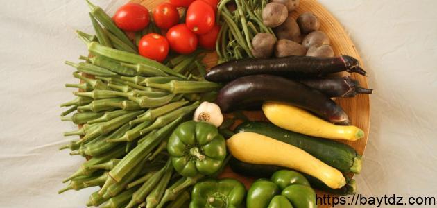 ما هو غذاء النباتات