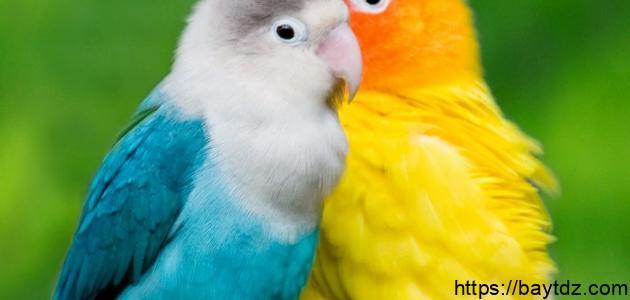 ما هي أنواع الطيور