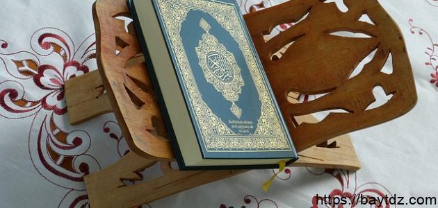 ما هي الحشرة التي تكلمت في القرآن