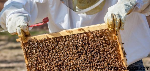 ما هي خلية النحل