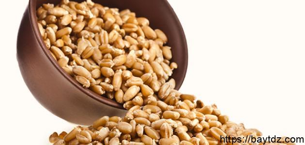 ما هي فوائد جنين القمح للتخسيس