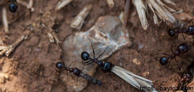ماذا نتعلم من النمل