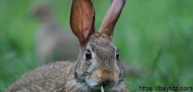 ماذا يسمى بيت الأرنب