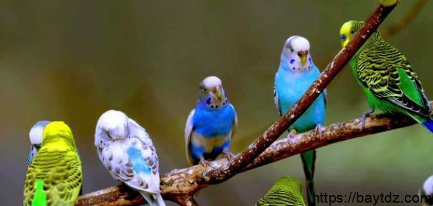 معلومات عن أنواع العصافير