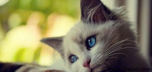 معلومات عن أنواع القطط