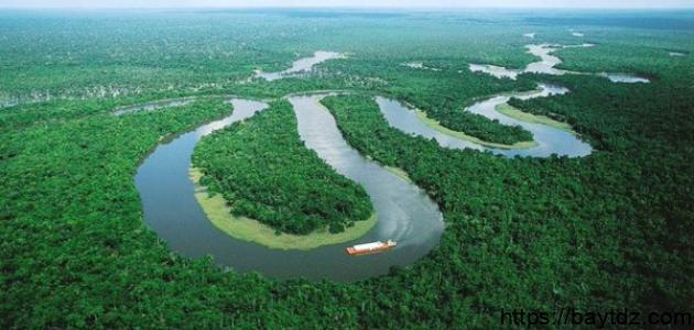 معلومات عن غابة الأمازون