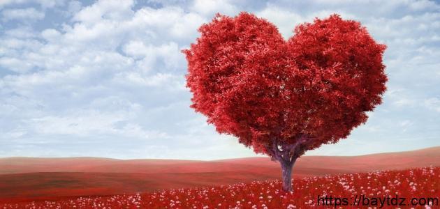 مفهوم الحب في الإسلام